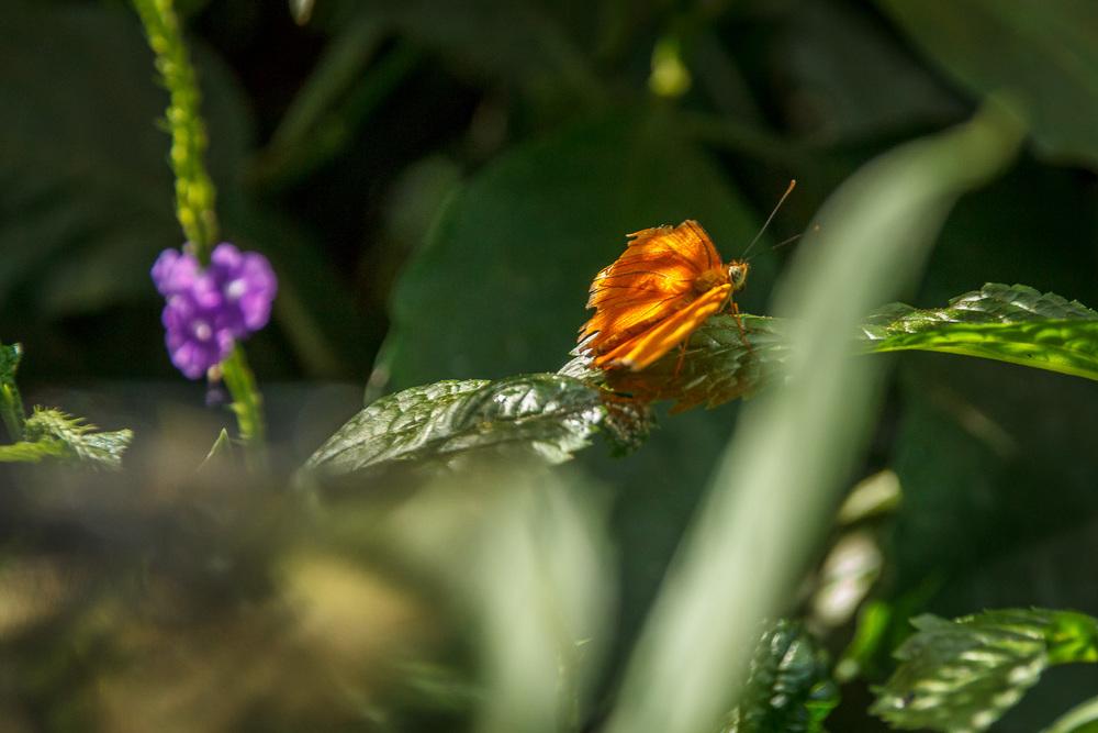 2015-07_22_Niagara Falls_Day 4_Butterfly Conservatory & Botanical Gardens_0027.jpg