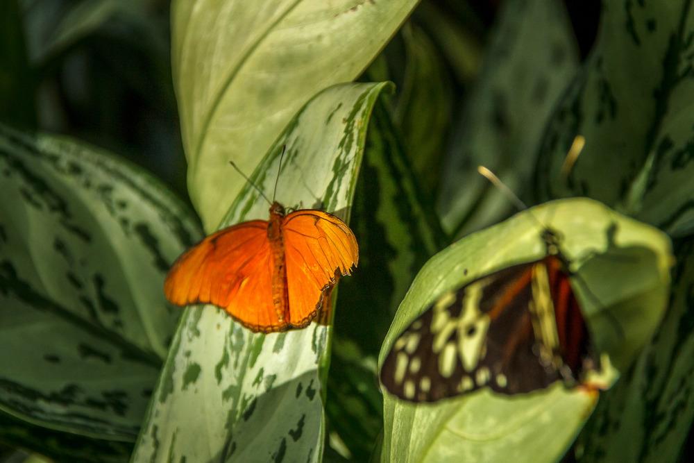 2015-07_22_Niagara Falls_Day 4_Butterfly Conservatory & Botanical Gardens_0028.jpg