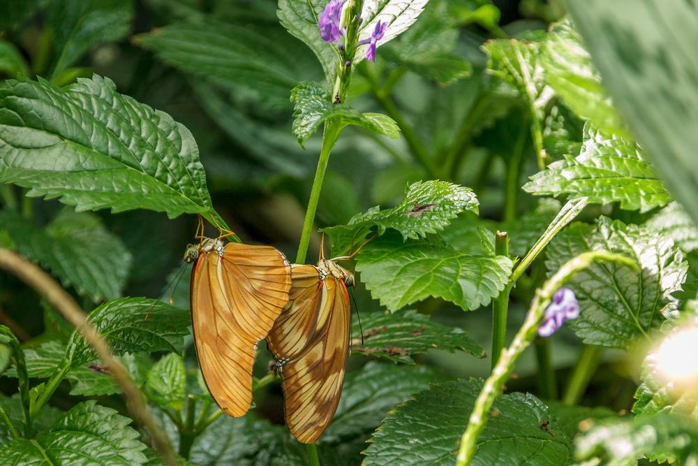 2015-07_22_Niagara Falls_Day 4_Butterfly Conservatory & Botanical Gardens_0031.jpg