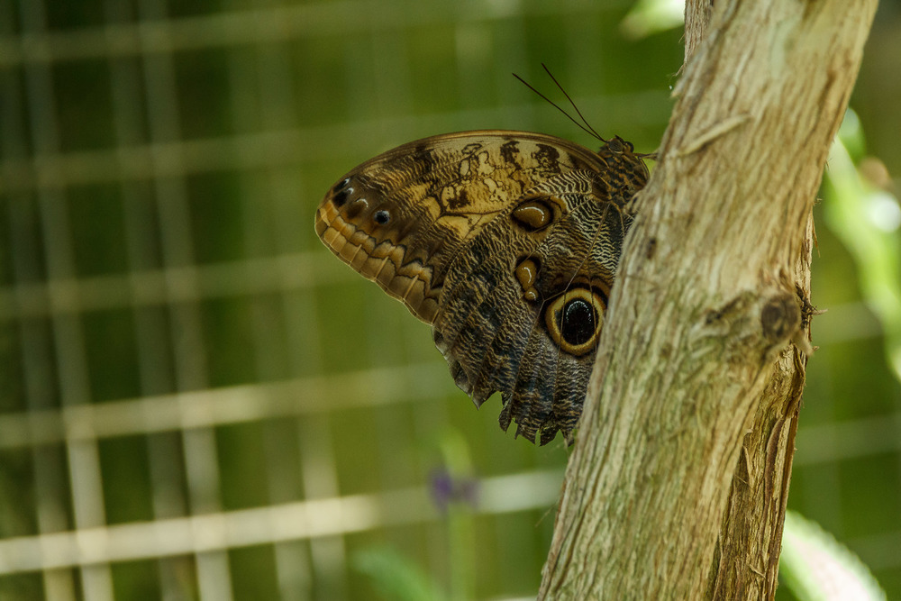 2015-07_22_Niagara Falls_Day 4_Butterfly Conservatory & Botanical Gardens_0034.jpg