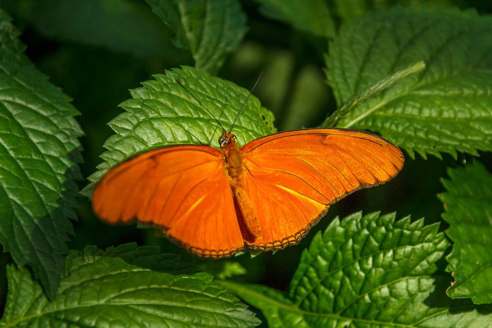2015-07_22_Niagara Falls_Day 4_Butterfly Conservatory & Botanical Gardens_0035.jpg