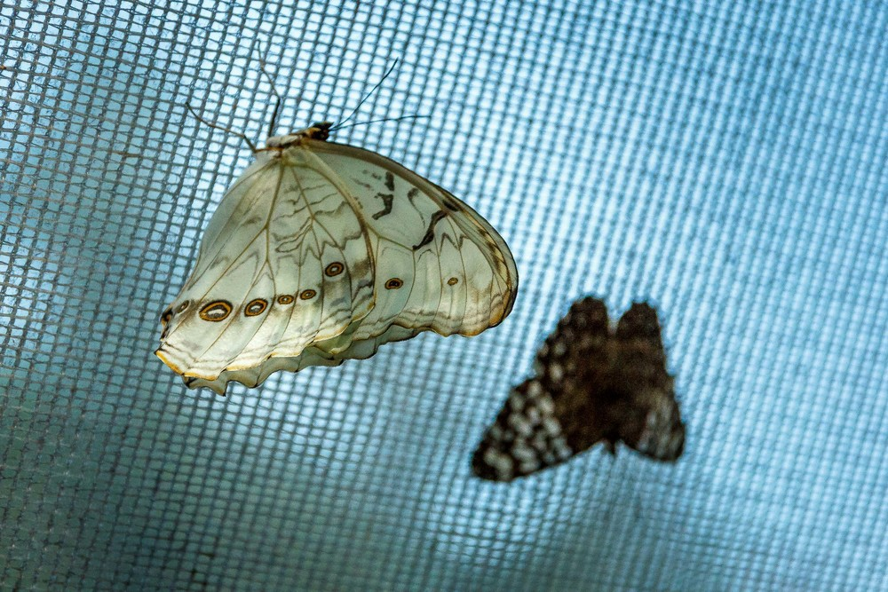 2015-07_22_Niagara Falls_Day 4_Butterfly Conservatory & Botanical Gardens_0040.jpg