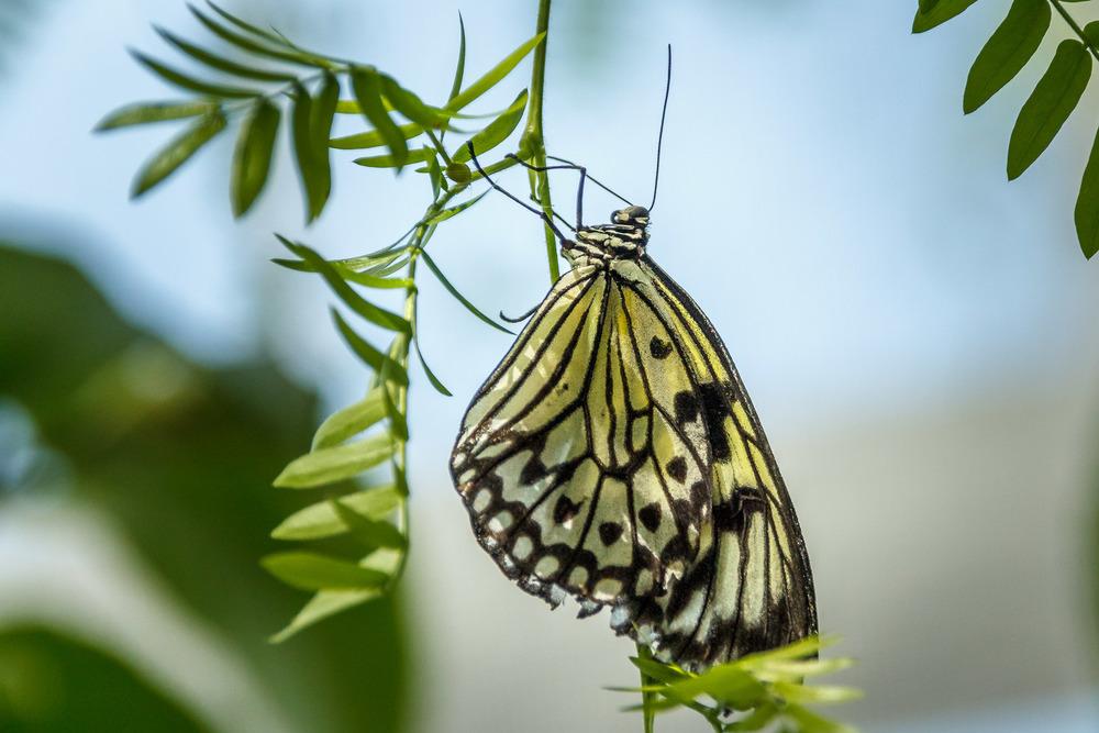 2015-07_22_Niagara Falls_Day 4_Butterfly Conservatory & Botanical Gardens_0043.jpg
