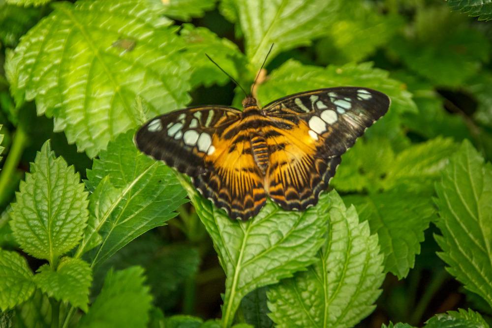 2015-07_22_Niagara Falls_Day 4_Butterfly Conservatory & Botanical Gardens_0045.jpg