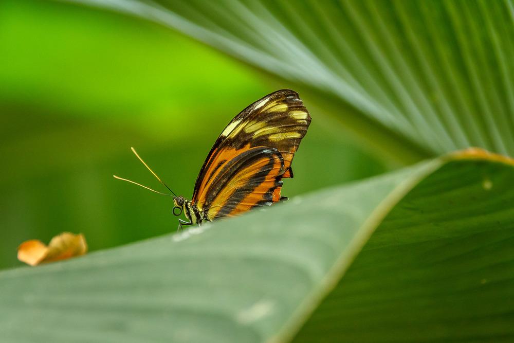 2015-07_22_Niagara Falls_Day 4_Butterfly Conservatory & Botanical Gardens_0047.jpg