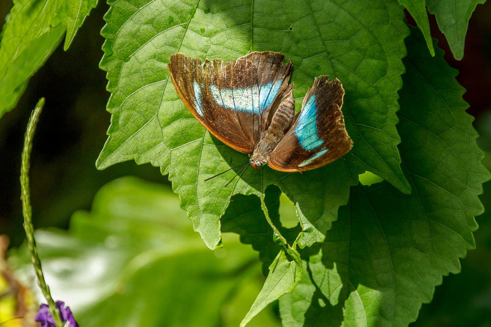 2015-07_22_Niagara Falls_Day 4_Butterfly Conservatory & Botanical Gardens_0048.jpg