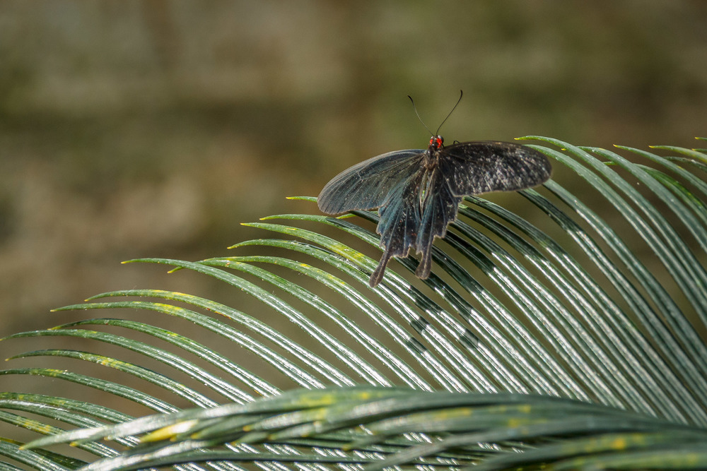 2015-07_22_Niagara Falls_Day 4_Butterfly Conservatory & Botanical Gardens_0050.jpg