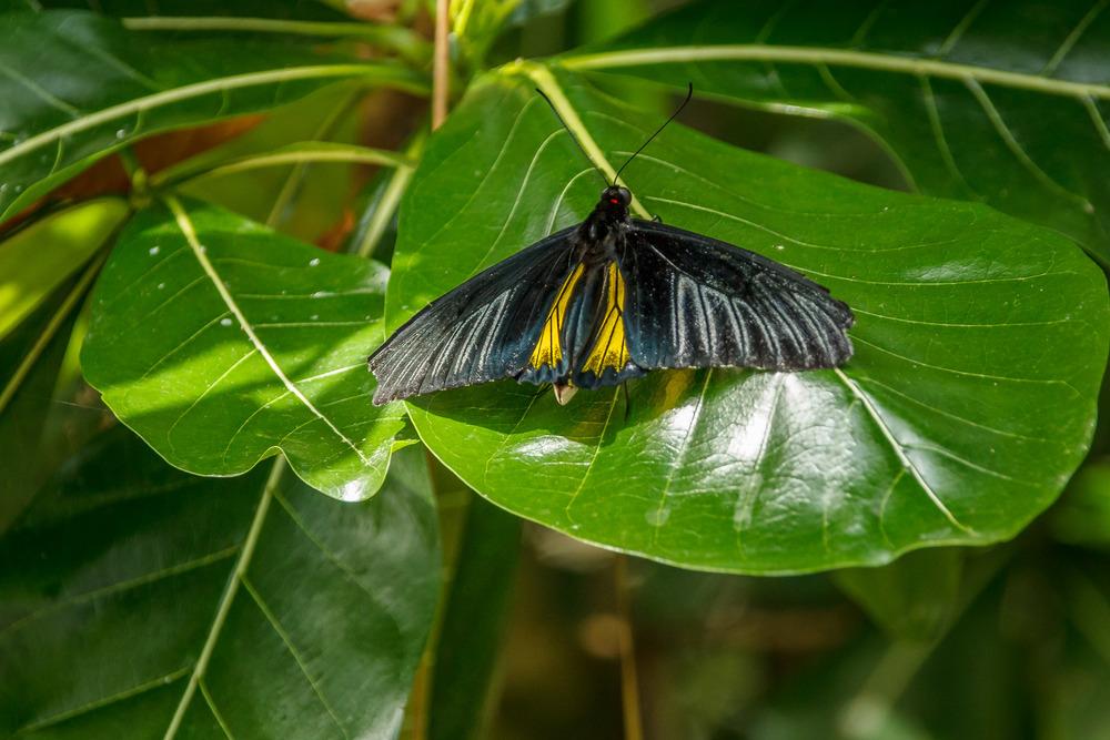2015-07_22_Niagara Falls_Day 4_Butterfly Conservatory & Botanical Gardens_0051.jpg