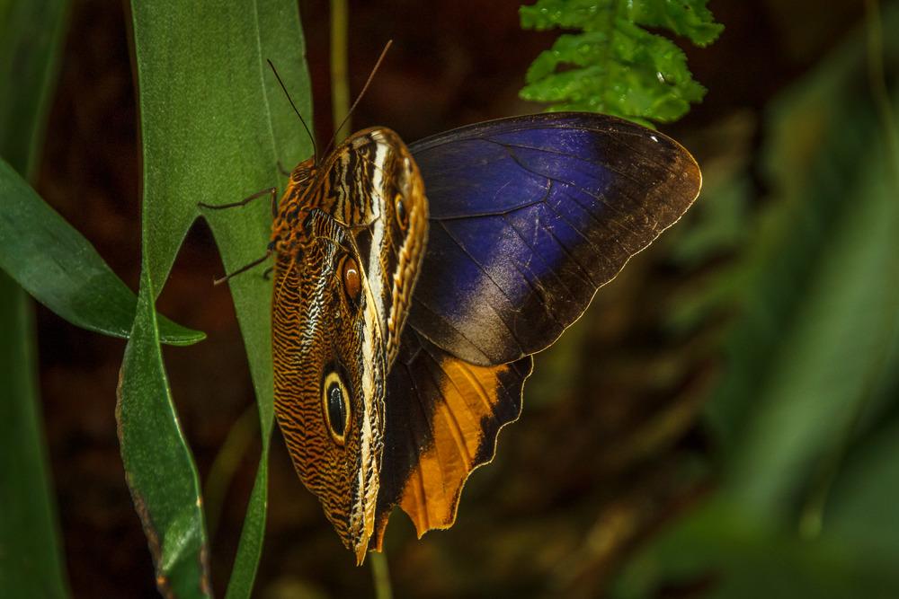 2015-07_22_Niagara Falls_Day 4_Butterfly Conservatory & Botanical Gardens_0054.jpg