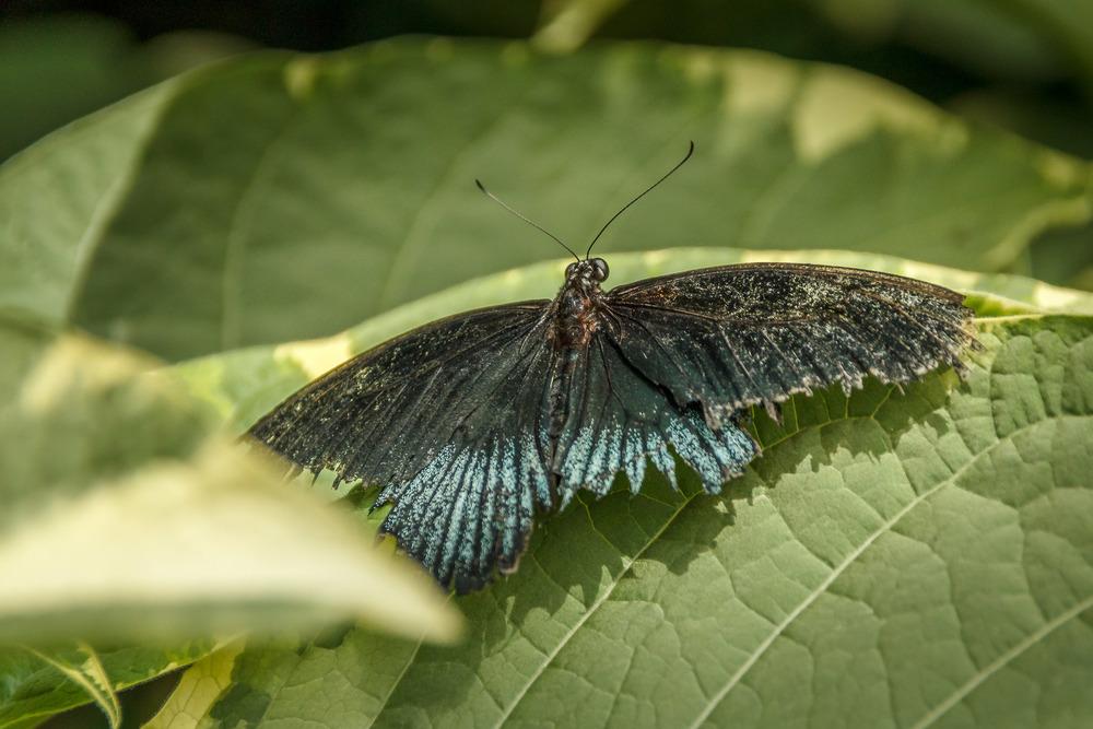 2015-07_22_Niagara Falls_Day 4_Butterfly Conservatory & Botanical Gardens_0057.jpg
