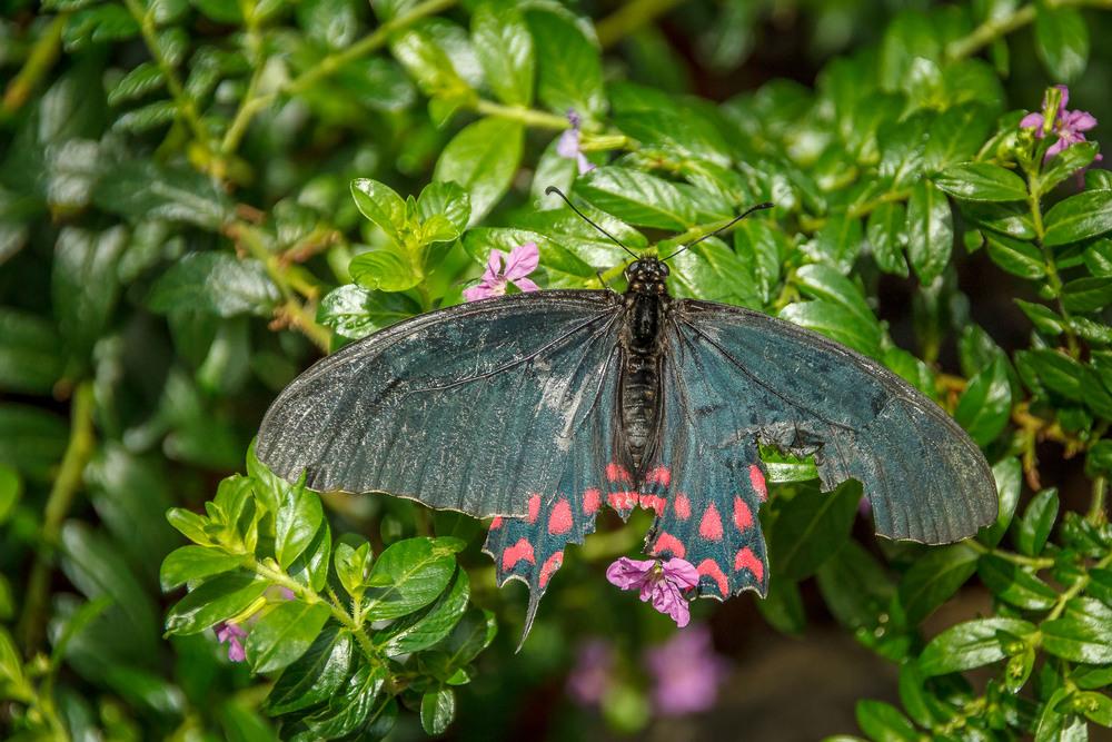 2015-07_22_Niagara Falls_Day 4_Butterfly Conservatory & Botanical Gardens_0058.jpg