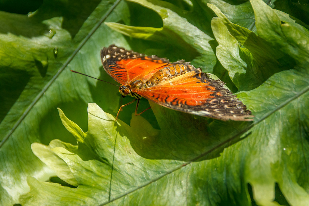 2015-07_22_Niagara Falls_Day 4_Butterfly Conservatory & Botanical Gardens_0060.jpg