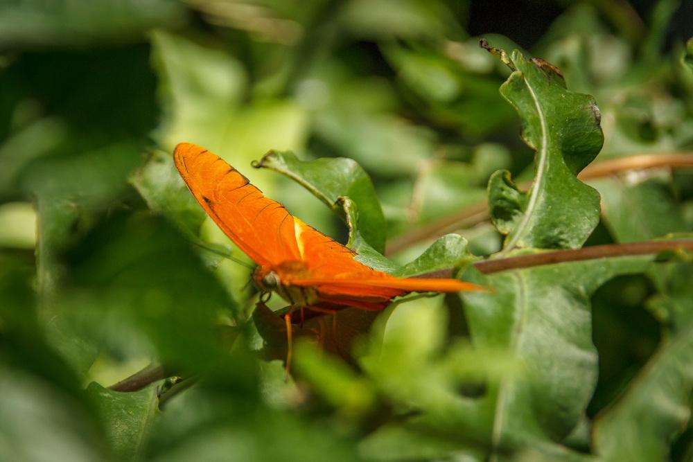 2015-07_22_Niagara Falls_Day 4_Butterfly Conservatory & Botanical Gardens_0061.jpg
