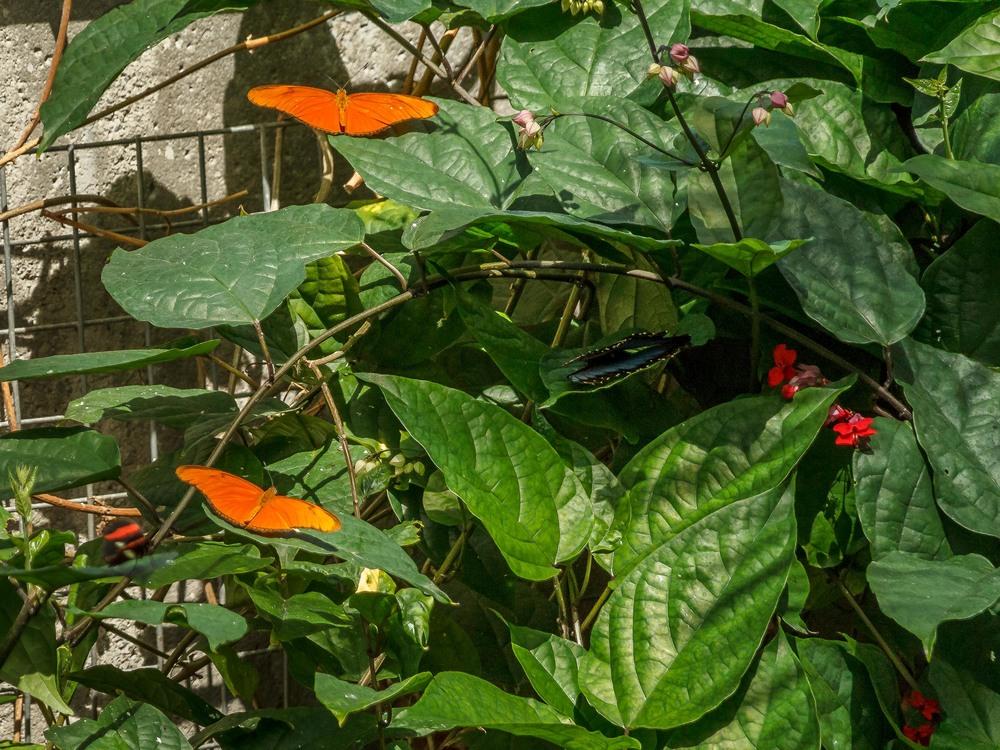 2015-07_22_Niagara Falls_Day 4_Butterfly Conservatory & Botanical Gardens_0063.jpg