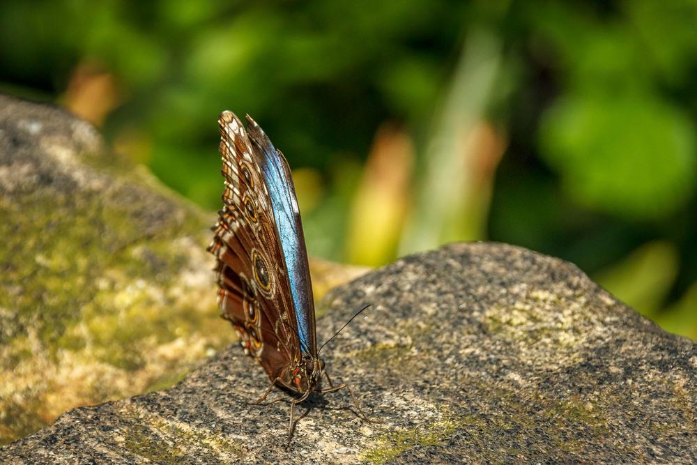 2015-07_22_Niagara Falls_Day 4_Butterfly Conservatory & Botanical Gardens_0064.jpg