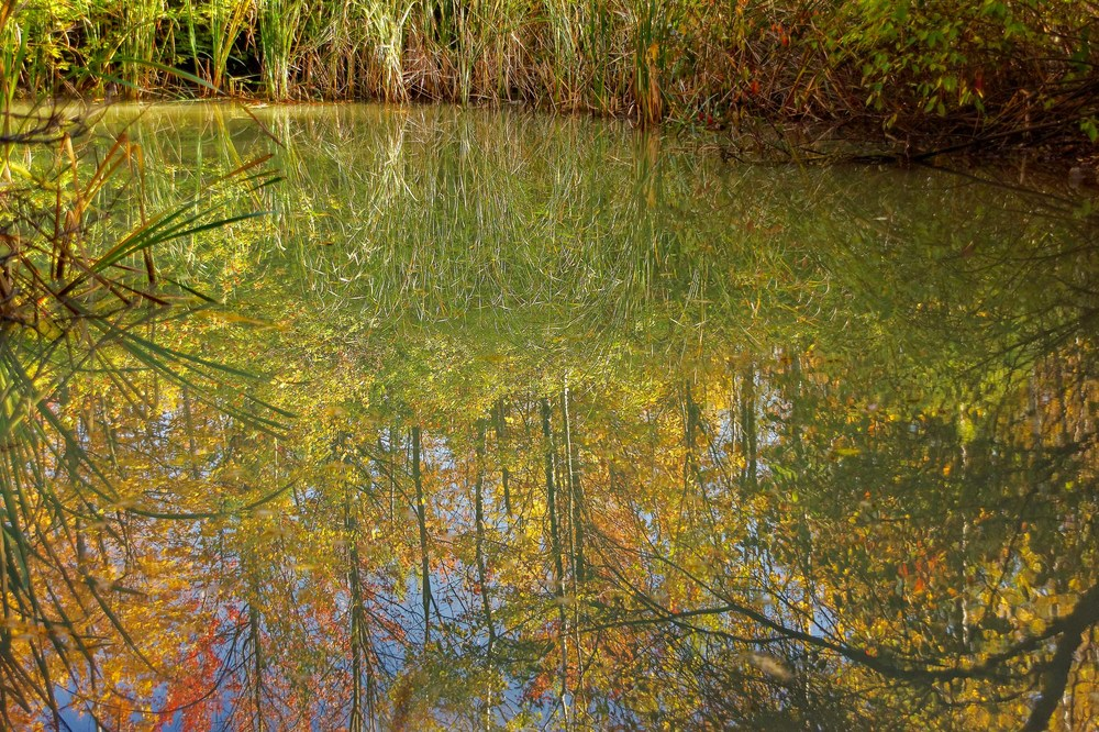 20131012_Fall Colors-Morgan Arboretum_IMG_1602XS_DxO.jpg