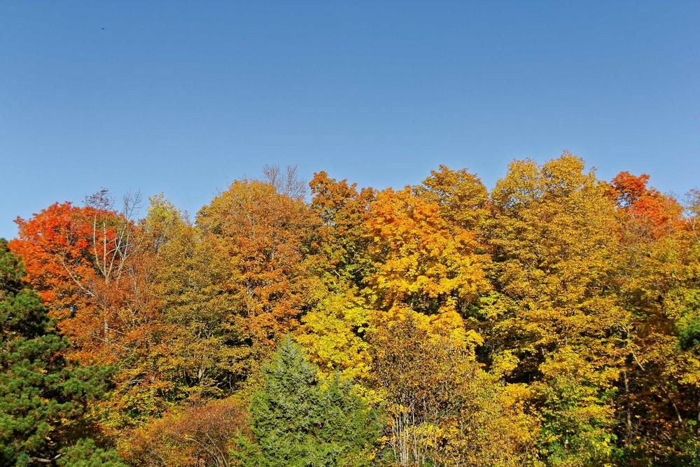 20131012_Fall Colors-Morgan Arboretum_IMG_1641_DxO.jpg