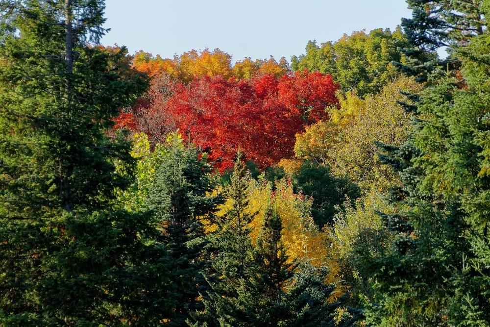 20131012_Fall Colors-Morgan Arboretum_IMG_1629_DxO.jpg