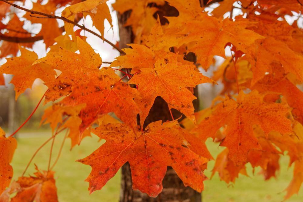 20131027_Fall Colors-Cap St. Jacques _IMG_1799_DxO.jpg