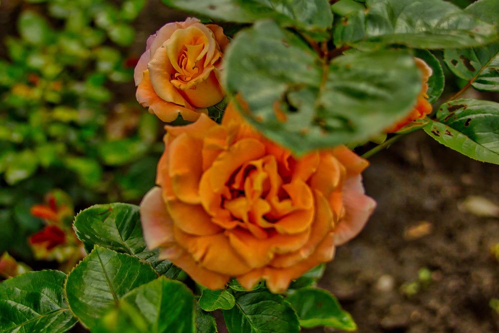 Botanical Gardens 2016-9_AuroraHDR_HDR.jpg
