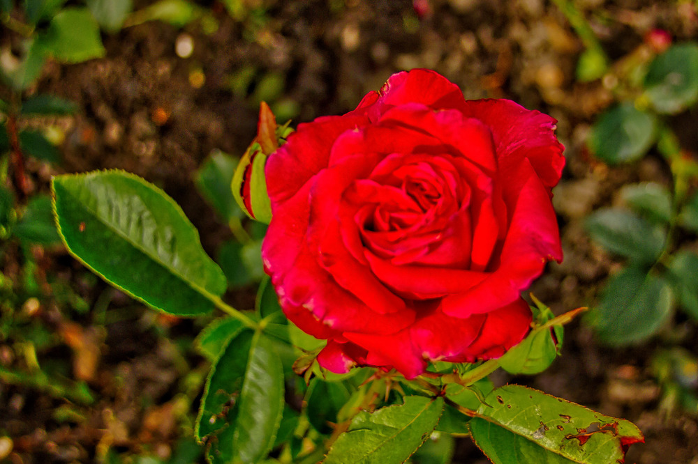 Botanical Gardens 2016-12_AuroraHDR_HDR.jpg
