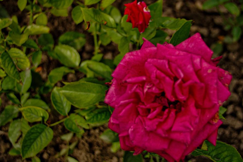 Botanical Gardens 2016-13_AuroraHDR_HDR.jpg