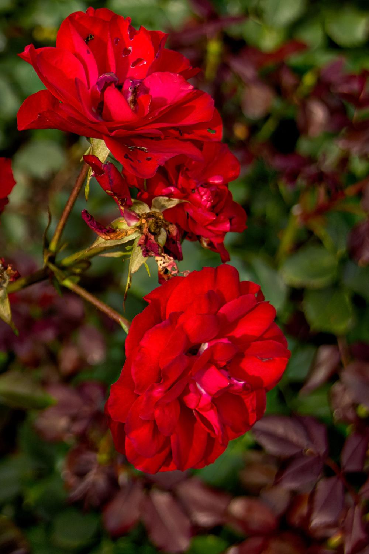 Botanical Gardens 2016-15_AuroraHDR_HDR.jpg
