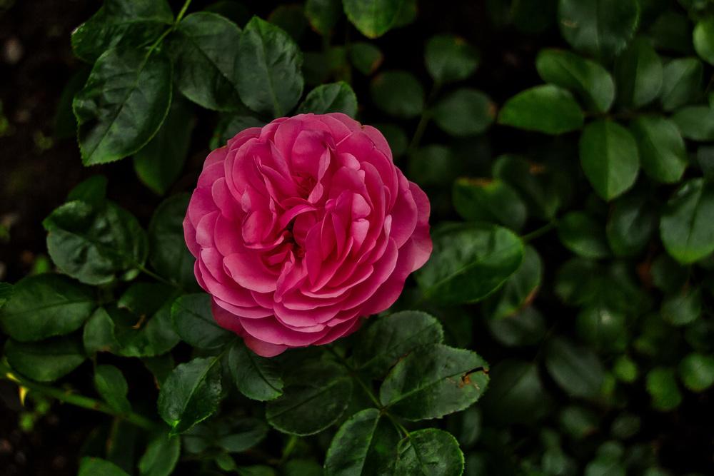 Botanical Gardens 2016-25_AuroraHDR_HDR.jpg