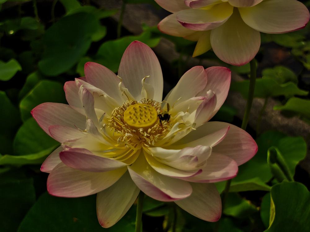 Botanical Gardens 2016-30_AuroraHDR_HDR.jpg