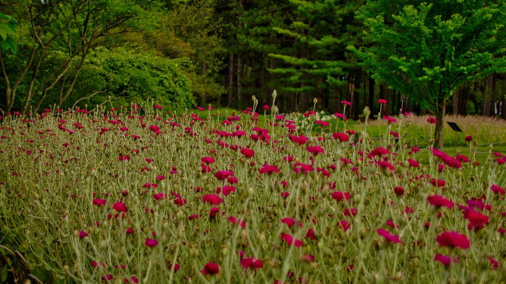 Botanical Gardens 2016-39_AuroraHDR_HDR.jpg