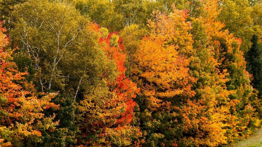 Fall Colors Mont Saint Sauveur-9.jpg