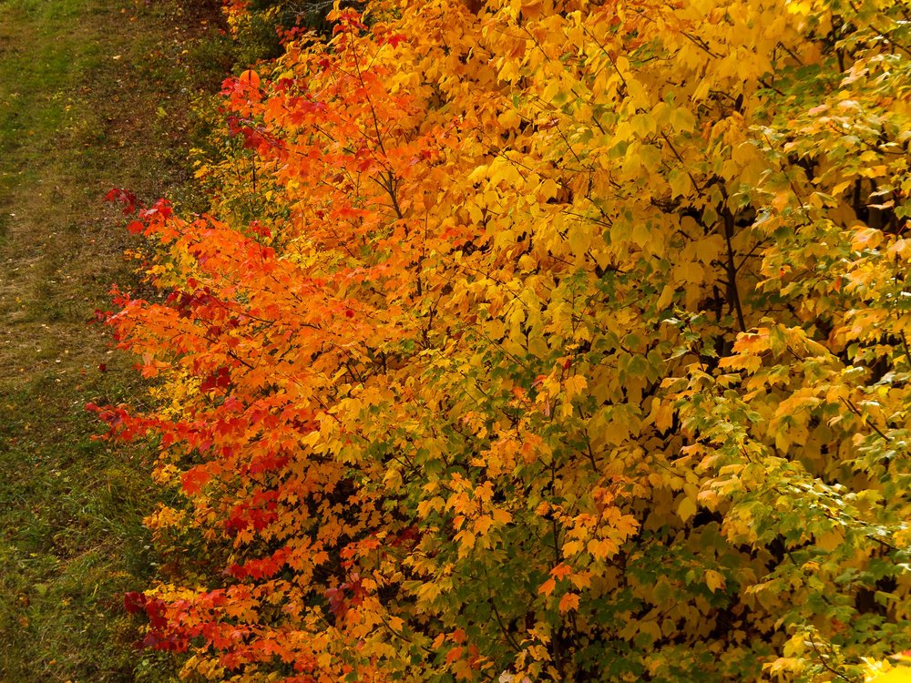 Fall Colors Mont Saint Sauveur-11.jpg