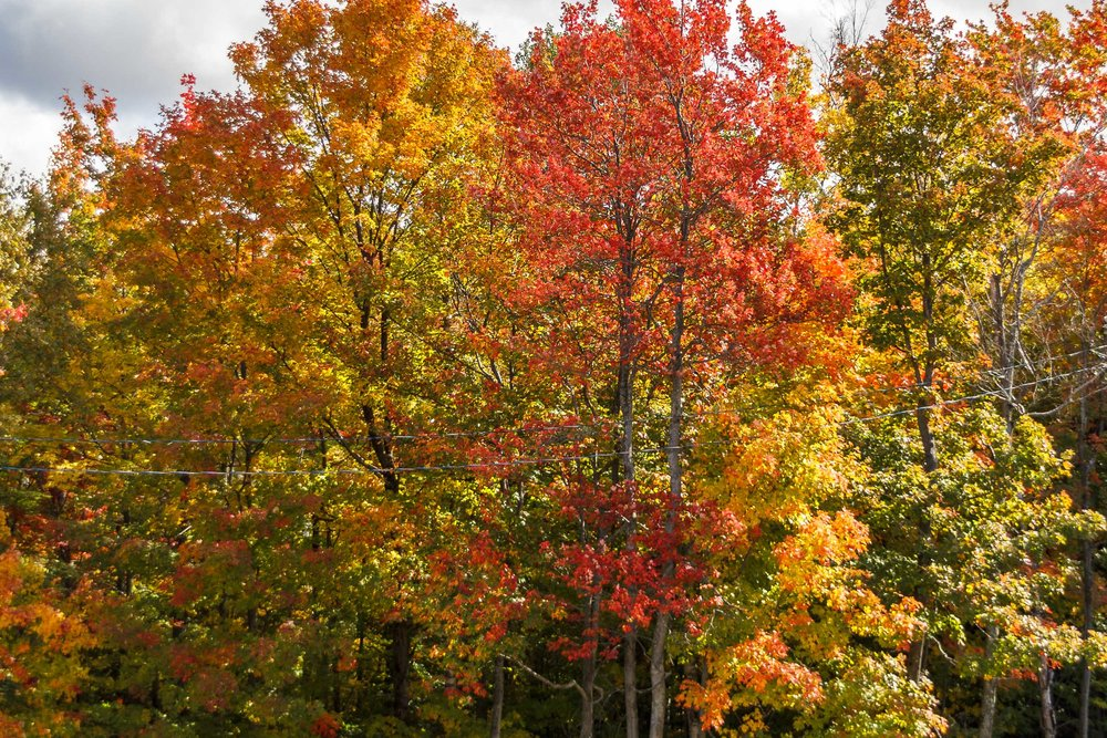 Fall Colors Mont Saint Sauveur-18.jpg