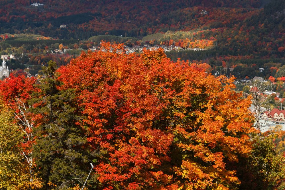 Fall Colors Mont Saint Sauveur-40.jpg