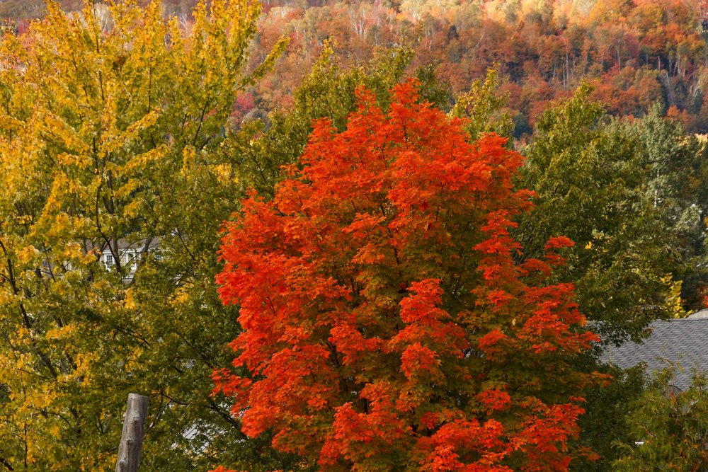Fall Colors Mont Saint Sauveur-69.jpg