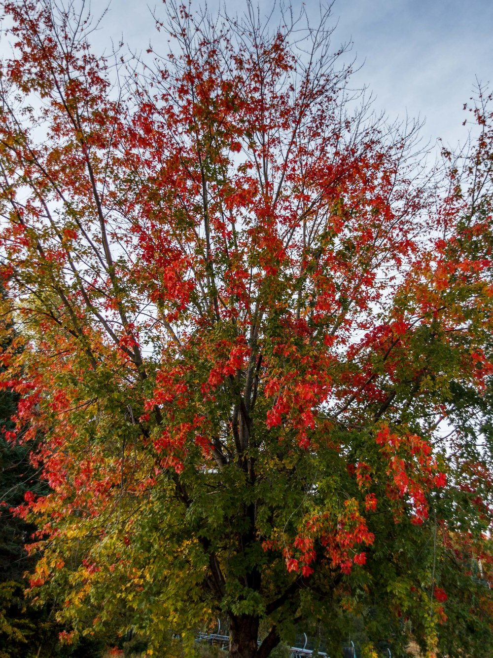 Fall Colors Saint Sauver-6.jpg