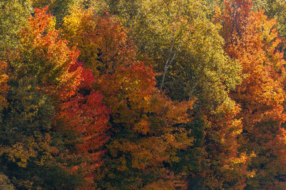Fall Colors Saint Sauver-17.jpg