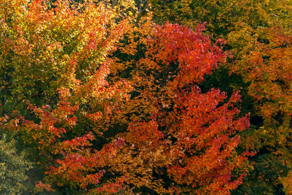 Fall Colors Saint Sauver-20.jpg