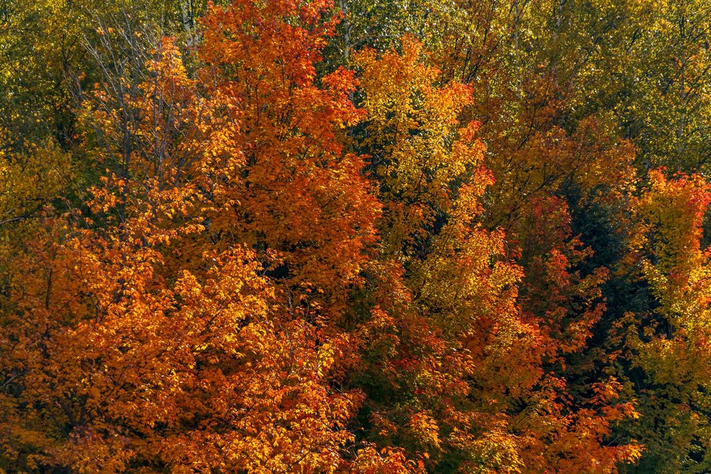 Fall Colors Saint Sauver-21.jpg