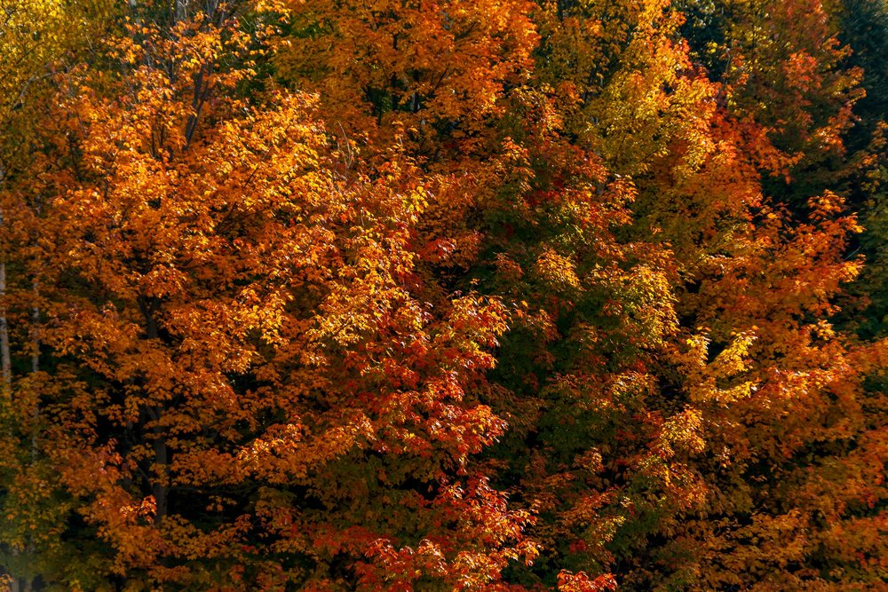 Fall Colors Saint Sauver-22.jpg