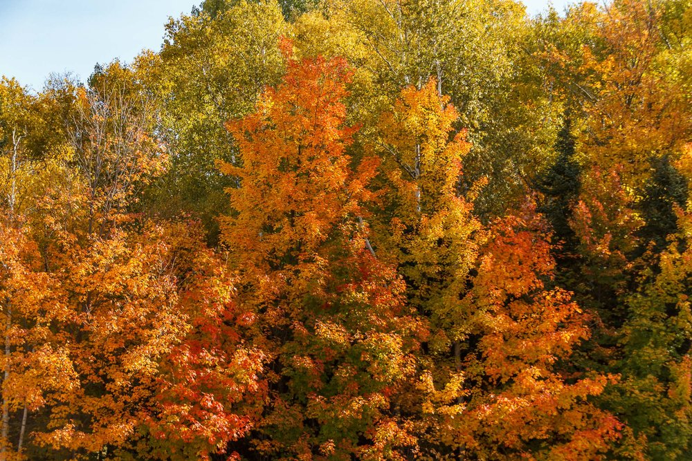 Fall Colors Saint Sauver-24.jpg