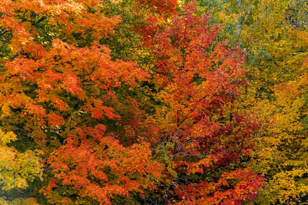 Fall Colors Saint Sauver-26.jpg
