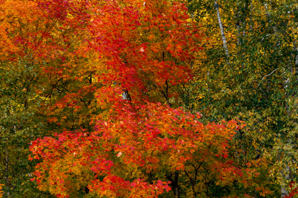 Fall Colors Saint Sauver-29.jpg