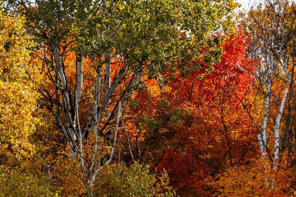 Fall Colors Saint Sauver-28.jpg
