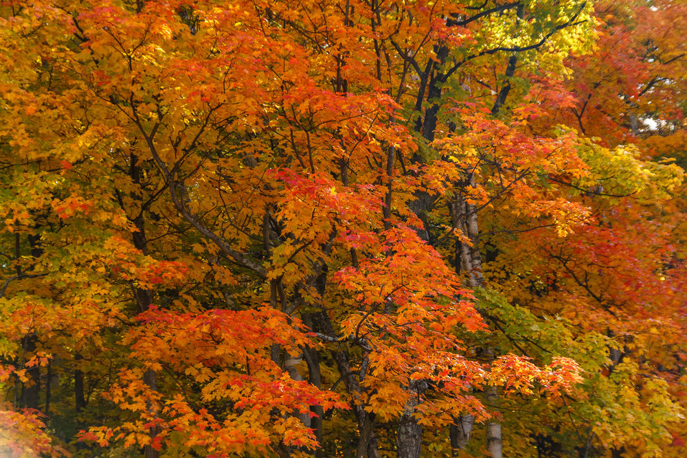 Fall Colors Saint Sauver-32.jpg