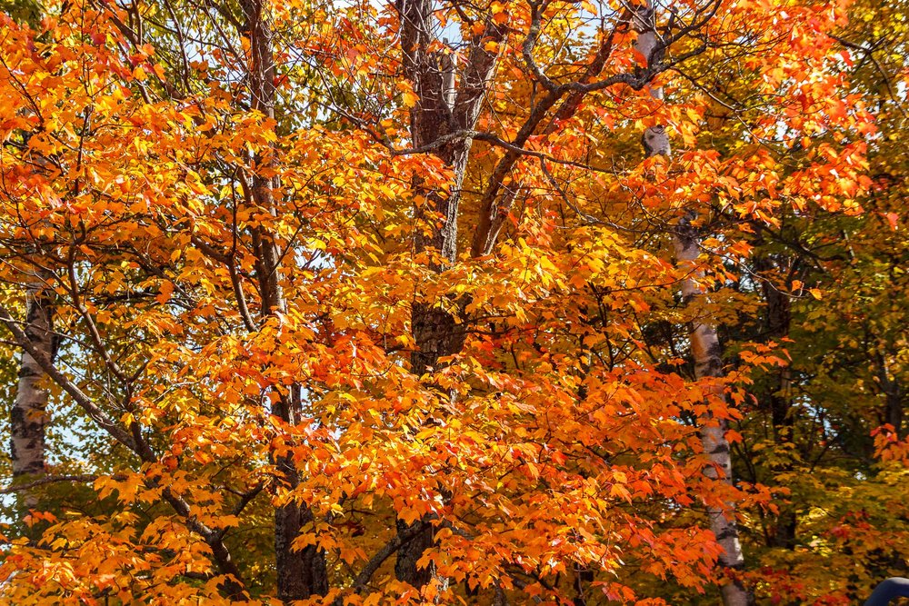 Fall Colors Saint Sauver-34.jpg