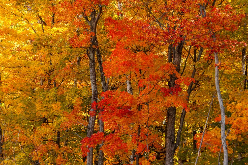 Fall Colors Saint Sauver-35-Edit.jpg