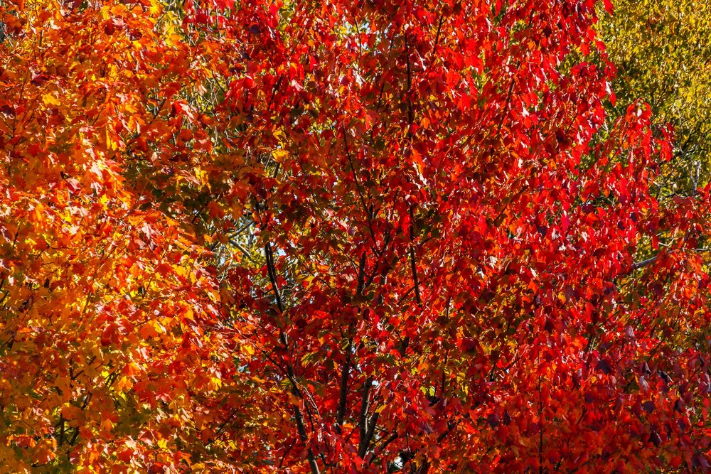 Fall Colors Saint Sauver-36.jpg