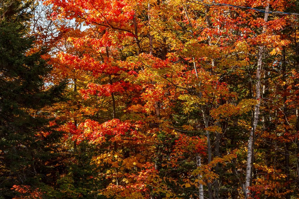 Fall Colors Saint Sauver-48.jpg
