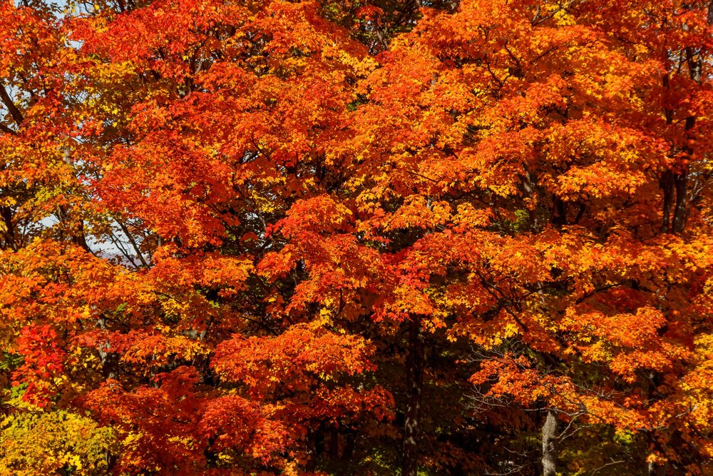 Fall Colors Saint Sauver-53-Edit.jpg